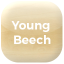 young-beech